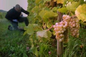 vignoble de Chautagne - Caveau